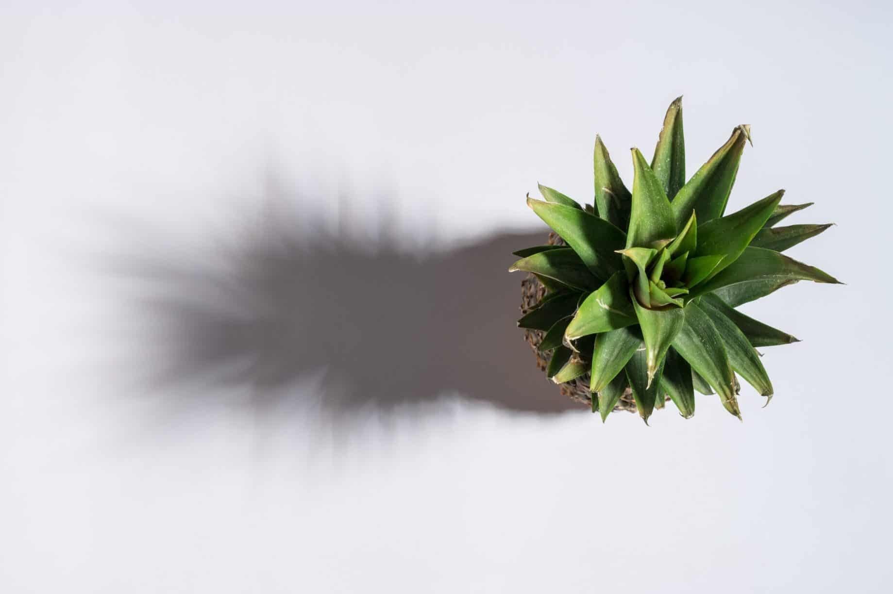 pineapple shadow green white background real 3d